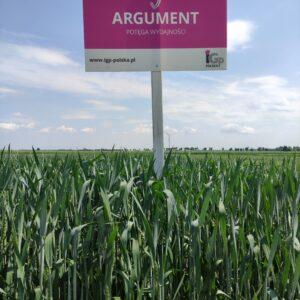 pszenica ozima argument 8 1