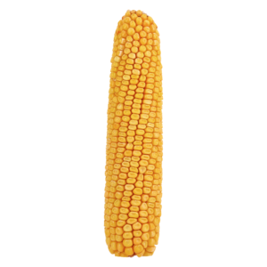 adenora kukurydza igp 10 1