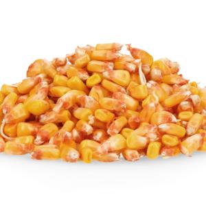 adenora kukurydza igp 6 1
