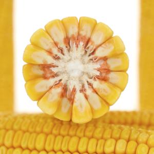 adenora kukurydza igp 7 1