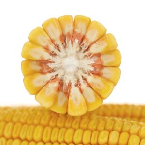 adenora kukurydza igp 8 1