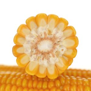 grapinga kukurydza igp 3 1