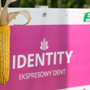 identity kukurydza igp 8 1