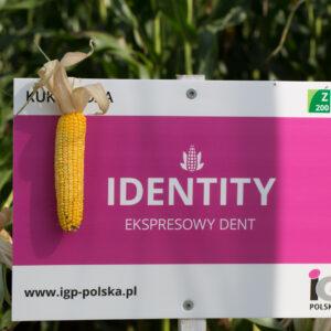 identity kukurydza igp 9 1