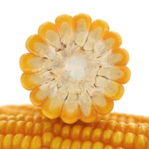 vulpix kukurydza igp 3 1