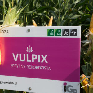 vulpix kukurydza igp 8 1
