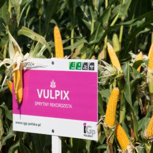 vulpix kukurydza igp 9 1